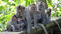 ATV Quad and Monkey Forest Ubud Tour, Kuta, 4WD, ATV & Off-Road Tours