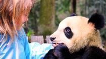 Half Day Transfer Service to Dujiangyan Panda Base with Panda Encounter Program Option, Chengdu,...