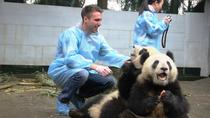 Hold the Panda & Street Food Walk Tour, Chengdu, Street Food Tours