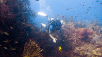 7-Night, 10-Dive Scuba Diving Experience in Grenada, Grenada, Multi-day Tours