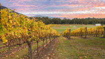 Yarra Valley Boutique Winery Tour from Melbourne, Melbourne, Wine Tasting & Winery Tours