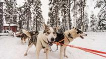 Husky Safari from Rovaniemi Including a Husky Sled Ride, ロヴァニエミ
