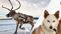 Lapland Reindeer and Husky Safari from Rovaniemi , Rovaniemi, Ski & Snow