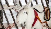 Lapland Reindeer Safari from Rovaniemi, Rovaniemi, Safaris