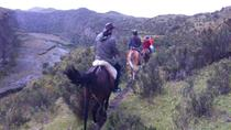 4-Day Horse Trek Through Andes or Cloud Forest, Quito