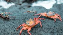 5 Days Galapagos All Inclusive Island Hopping Tour, Quito, Multi-day Tours