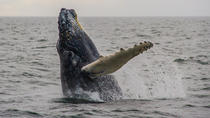 Private Whale Watching Tour in Los Cabos, Los Cabos, Day Cruises