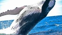 Whale-Watching Expedition in Los Cabos, Los Cabos, Dolphin & Whale Watching