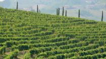 Monferrato Wine Tour Including Transportation, Langhe-Roero and Monferrato, Wine Tasting & Winery...