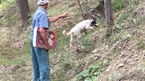 Truffle Hunting and Barolo tasting including transport, Langhe-Roero and Monferrato, Half-day Tours