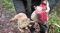 Truffle hunting and food tasting, Langhe-Roero et Monferrato