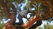 2-Hour Landrover Tour of the Alentejo Cork Forest, Alentejo, Private Tours