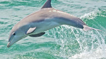 Dolphin Watching, Cape May, Cultural Tours