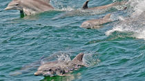 Whale and Dolphin Watching Cruise from Cape May, Cape May, Dolphin & Whale Watching