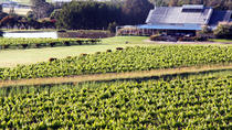 Private Hunter Valley Day Trip from Sydney Including Wine, Chocolate and Cheese Tasting, Sydney, ...
