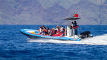 Dolphin and Whale Watching On Board a Speed-Boat in Funchal, Funchal, City Tours