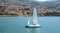 Madeira Dolphin and Whale Watching on a Luxurious Catamaran, Funchal, Dolphin & Whale Watching