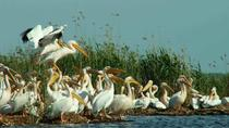 Danube Delta Wonders 2 days Tour, Bucharest, Multi-day Tours