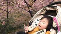 Early Cherry Blossoms Festival and Strawberry Picking from Tokyo
