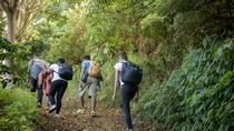 Blue Mountain Peak Hiking Tour from Kingston, Kingston, Hiking & Camping