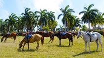 Braco Stables Hiking and Biking Tour Tour from Falmouth, Falmouth, Bike & Mountain Bike Tours