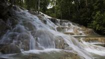 Dunn's River Falls and Fern Gully Highlight Adventure Tour from Montego Bay, Montego Bay, Day Trips