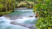 Dunn's River Falls and Fern Gully Highlight Adventure Tour from Runaway Bay, Runaway Bay, Private ...