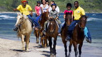 Falmouth Shore Excursion: Braco Stables Horseback Ride and Swim, Falmouth, Western Caribbean Shore ...