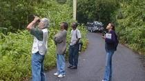 Mile End Walking Tour from Ocho Rios, Ocho Rios, Ports of Call Tours