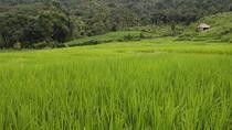 Full-Day Chiang Mai Jungle Natural Trekking Tour, Chiang Mai, Day Trips