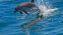 Dolphin watching in the wild, Lisbon, Dolphin & Whale Watching
