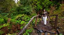 Sao Miguel Azores to Faial da Terra Trekking from Ponta Delgada , Ponta Delgada, Hiking & Camping