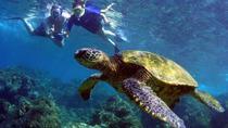 Turtle Reef Kayak Snorkel, Maui, Snorkeling