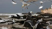 Private Tour: Essaouira Day Trip from Marrakech with Camel Ride, Marrakech, Private Sightseeing...