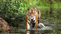 3 Days Bandhavgarh Tiger Safari, Khajuraho, Multi-day Tours