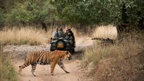 4 Days Ranthambore Tiger Safari, Jaipur, Multi-day Tours