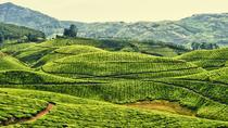 Amazing Kerala Trip, Kochi, Multi-day Tours