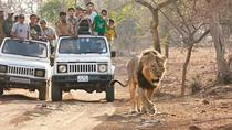 Wildlife Safari In Gir National Park, Gujarat, Multi-day Tours