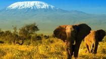2-Day Amboseli Safari from Nairobi, Nairobi, Multi-day Tours