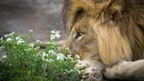 2-day Safari from Arusha: Lake Manyara - Tarangire - Ngorongoro, Arusha, Multi-day Tours