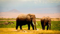 3-Day Amboseli Private Safari from Nairobi, Nairobi, Multi-day Tours