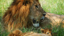 3-Day Masai Mara Guided Safari from Nairobi, Nairobi, Multi-day Tours