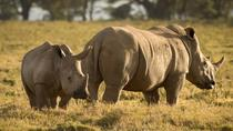 4-Day Masai Mara and Lake Nakuru Safari from Nairobi