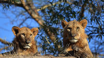 4-Day Masai Mara and Lake Nakuru Safari from Nairobi, Nairobi, Multi-day Tours