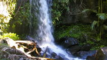 The Best of Tamborine Mountain from the Gold Coast, Gold Coast, Day Trips