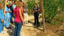 Wine tour and Wine Tasting in a Vinho Verde Estate, Porto, Wine Tasting & Winery Tours