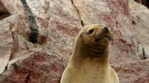 Ballestas Islands Group Tour from Paracas, パラカス