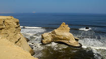 Half-Day Small Group Tour to Paracas Reserve from San Martin , Paracas, Ports of Call Tours