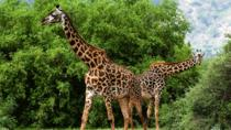 Africam Safari Zoo Admission with Transportation, Puebla, Zoo Tickets & Passes