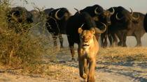 Chobe National Park Camping Safari 3-Days 2 nights, Victoria Falls